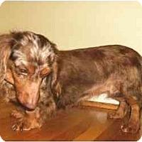Adopt A Pet :: Carmen - Mooy, AL