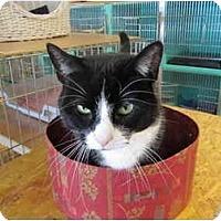 Adopt A Pet :: Mitzi - Pascoag, RI