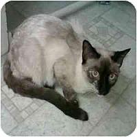 Adopt A Pet :: Tasha - Phoenix, AZ