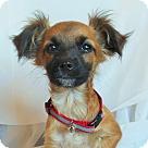 Adopt A Pet :: Harvey