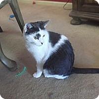 Adopt A Pet :: Patch-Adoption Pending! - Colmar, PA