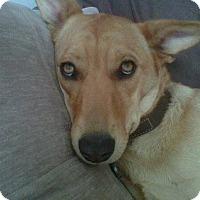 Adopt A Pet :: GISELLE - Malibu, CA