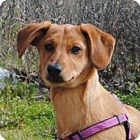 Adopt A Pet :: Tia - Weatherford, TX