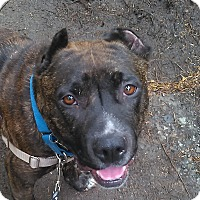 Adopt A Pet :: Radiant Ruby - Issaquah, WA