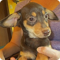 Adopt A Pet :: Javier - Westport, CT
