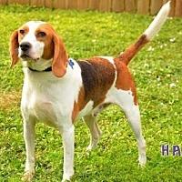 Adopt A Pet :: Elvis - Sebastian, FL