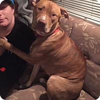Adopt A Pet :: Lily - Lincolnton, NC
