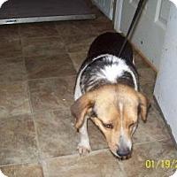 Adopt A Pet :: Lola - Lewisburg, TN