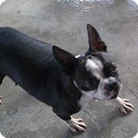 Adopt A Pet :: Betty Lu - Bonifay, FL