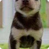 Adopt A Pet :: Purdue - Barnegat, NJ