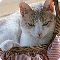 Adopt A Pet :: Jenny - North Fort Myers, FL