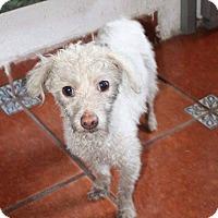 Adopt A Pet :: Rostia - Calgary, AB
