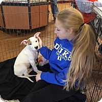 Adopt A Pet :: Comic Relief Crew - Phoenxville, PA