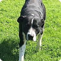 Adopt A Pet :: Willie - Evansville, IN