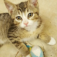 Adopt A Pet :: myra - Gainesville, GA
