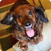 Adopt A Pet :: MILLIE - Hurricane, UT