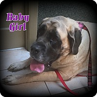 Adopt A Pet :: Baby Girl - Denver, NC