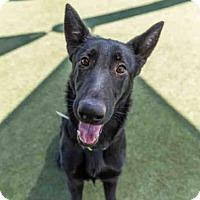 Adopt A Pet :: LUNA - Martinez, CA