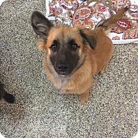 Adopt A Pet :: Guinness - Thousand Oaks, CA
