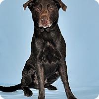 Adopt A Pet :: Dexter - Gatineau, QC