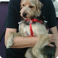 Adopt A Pet :: Sasha - Thousand Oaks, CA