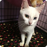 Adopt A Pet :: Winter - Lunenburg, MA