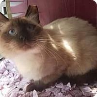 Adopt A Pet :: Rollo - Ennis, TX