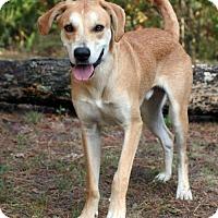 Adopt A Pet :: Gambit - Burbank, OH