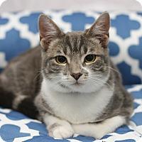 Adopt A Pet :: Drago - Monrovia, CA