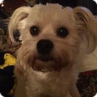 Adopt A Pet :: Cassidy - Ypsilanti, MI