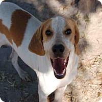 Adopt A Pet :: POWDER - Panama City, FL