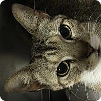 Adopt A Pet :: Sparrow - Spring, TX