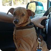 Adopt A Pet :: Aaron - Carthage, NC