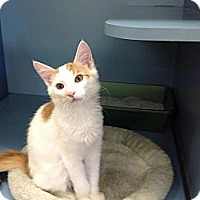 Adopt A Pet :: Crookshanks - Lake Charles, LA