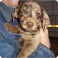 Adopt A Pet :: Aden - Adamsville, TN