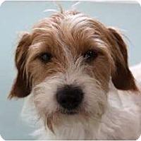 Adopt A Pet :: BOGART - san diego, CA