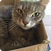 Adopt A Pet :: Gracie - New Smyrna Beach, FL