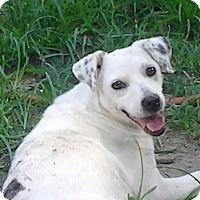 Adopt A Pet :: Ellie - Bedminster, NJ