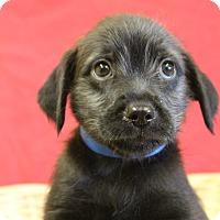 Adopt A Pet :: Prince - Waldorf, MD
