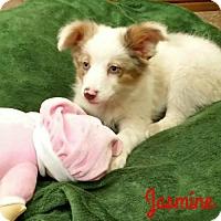 Adopt A Pet :: ADOPTION PENDING - Cushing, OK