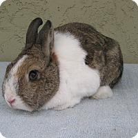 Adopt A Pet :: Evie - Bonita, CA