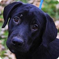 Adopt A Pet :: Macarena - El Cajon, CA