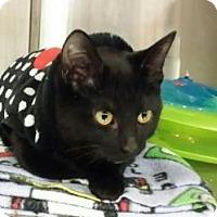 Adopt A Pet :: Meenie - Chicago, IL