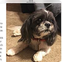 Adopt A Pet :: Hudson - LEXINGTON, KY