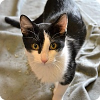 Adopt A Pet :: Wendell - Michigan City, IN