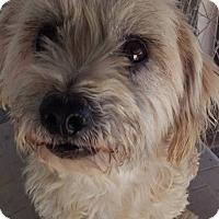 Adopt A Pet :: Brewster - Las Vegas, NV