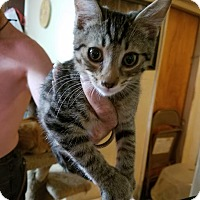 Adopt A Pet :: Arthur - Walla Walla, WA