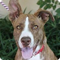 Adopt A Pet :: LOVETTE - Red Bluff, CA