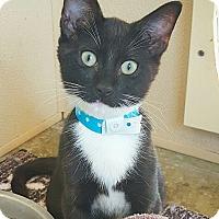 Adopt A Pet :: Matteo - Fredericksburg, TX