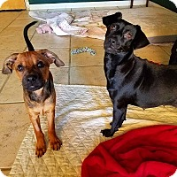 Adopt A Pet :: Raine and Thunder - Ft. Lauderdale, FL